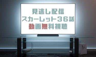 ドラマ|スカーレット36話の見逃し動画を無料で見れる動画配信まとめ